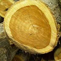 Ivory Coast Teak Wood - 01