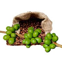 Green Coffee Bean Extract 01