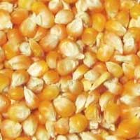 Yellow Corns