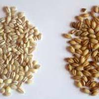 Hulled Wheats