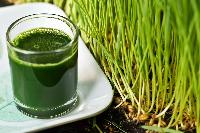 Wheatgrass Juice 01