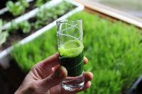 Wheatgrass Juice 03