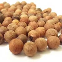 Santalum Album Seeds
