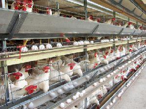Livestock Solutions