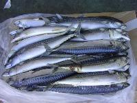 Frozen Herring Fishes