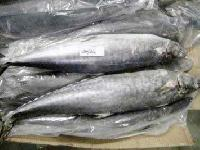 Frozen King Fishes