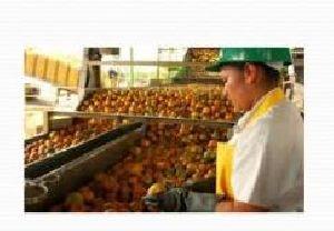 Organic Food Product 05