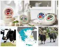 Greek Chios Island Cheese