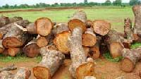 Neem Wood 01
