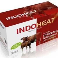 Indo Heat Veterinary Bolus
