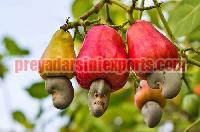 Fresh Cashew Apple