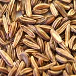 Caraway Essential Oil