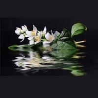 Jasmine Water