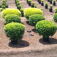 Gardening Plants Suppliers