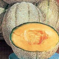 Hales Best Jumbo Muskmelon Seeds