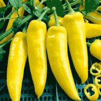 Hungarian Yellow Wax Hot Pepper Seeds