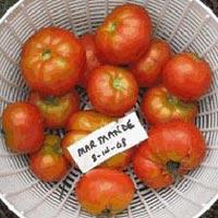 Marmande Tomato Seeds