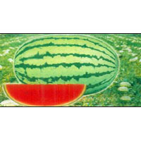 Watermelon Seeds (BSS-2000)