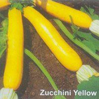 Zucchini Seeds