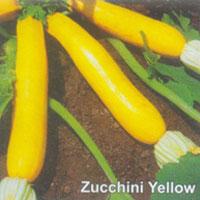 Zucchini Yellow Seeds