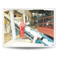 Belt Conveyor for Hand Picking of Cotton