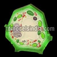 Typical Plant Cell (PB-38)