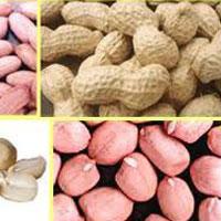 Groundnut Exporter