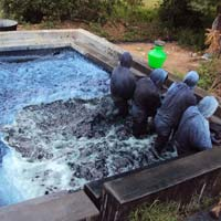 Natural Indigo Fabric Dye