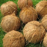 Coconut (SII 02)