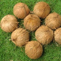 Coconut (SII 03)