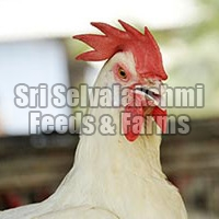 Poultry Manure