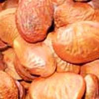 Karanj Seeds (Pongamia Pinnata)