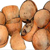 Raw Coconut Shell