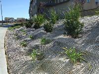 Jute Soil Saver/ Jute GEO Textile (LMC-01)