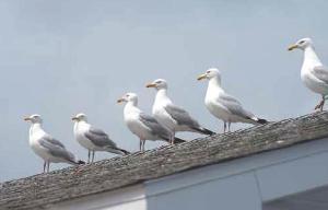 Bird Spike Guard 02