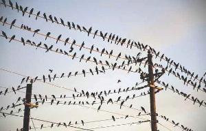Bird Spike Guard