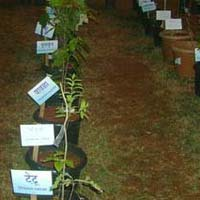 Ayurvedic Herbal Plants