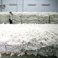 Raw Cotton 01