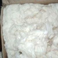 Raw Cotton 03