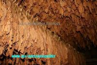 Tobacco Leafs Exporters