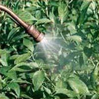 Soil Fertilizers