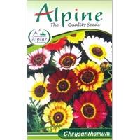 Chrysanthemum Flower Seeds