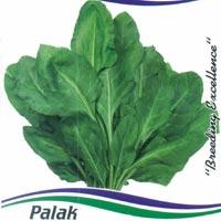OP Spinach Seeds