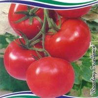 OP Tomato Seeds