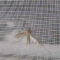 Mosquito Proof Screen 02
