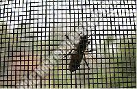 Mosquito Proof Screen 01