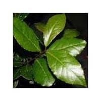 Laurel Leaf Oil