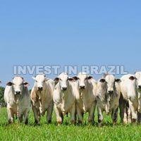 Ranches & Farming Consultancy