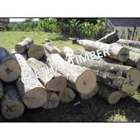 Gmelina Log 001