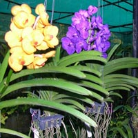 Orchid Plant 04